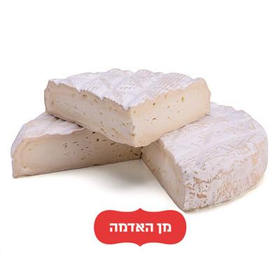 קממברט Camembert