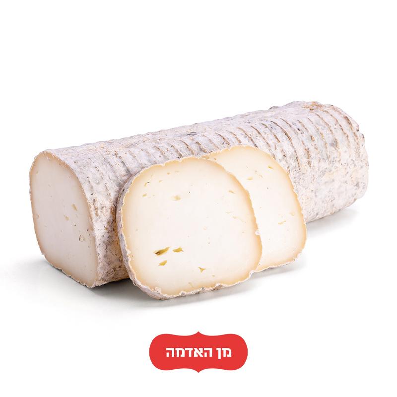 גבינת 'ענבר' מחלבת הנוקד